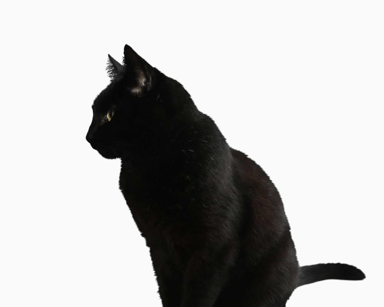 transparent black cat - 900×947